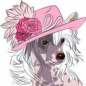 foto of dog-rose  - hipster dog Chinese Crested breed in a pink hat with roses - JPG