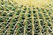 Closeup green cactus