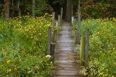 Little Board Walk