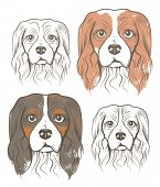Vector illustration of Dogs - Cavalier King Charles Spaniel