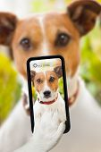 stock photo of toy dog  - dog taking a selfie with a smartphone - JPG