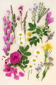 Summer flower and herb selection over mottled cream background.