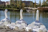 foto of pedal  - pedal Swan boats on the lake waiting for the tourists - JPG
