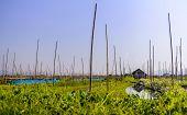 Floating Gardens, Inle Lake, Myanmar (burma)