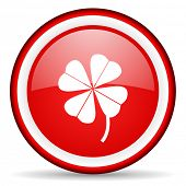 four-leaf clover web icon