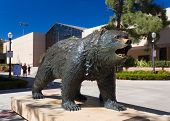 The Bruin Bear Statue At Ucla
