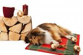 Dog sleeping near the knitted cup and christmas ornaments on stack of firewood