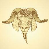 Sketch Cute Goat Head In Vintage Style