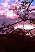 Ash sunset