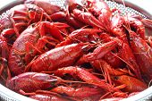 stock photo of crawfish  - boiled crawfish clayfish party - JPG