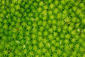 Green moss in macro photography as background.