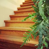 Wooden Staircase And Green Plant