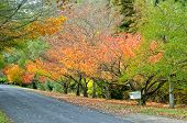 Mt Wilson Autumn Scene