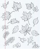 Set of autumn leaves chestnuts acorns and viburnum on a background of exercise book in a cage. black