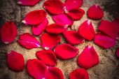 Rose Petals On The Rocks
