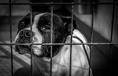 Dog in dog shelter