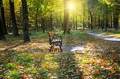 Beautiful Autumn Park With Paths And Benches