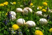 stock photo of fairy  - Mystical beautiful fairy ring of white mushrooms - JPG