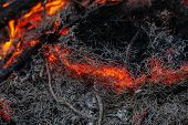 in a pine forest fire burning branches and trees macro shooting