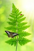 Fern with butterfly