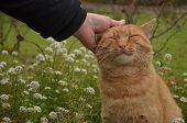Women Pets A Cat