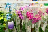 beautiful colorful flowers in  shop