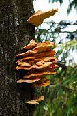 Several Orange Mushrooms Growing On A Tree