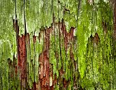 Green Moldy Old Wood Texture