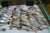 Fresh Fish On Ice In Fish Market