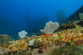 Coral Encrusted Shipwreck - Roatan, Honduras