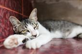 Grey Cat Sleeping On The Floor