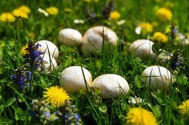 stock photo of sorcerer  - Mystical beautiful fairy ring of white mushrooms - JPG