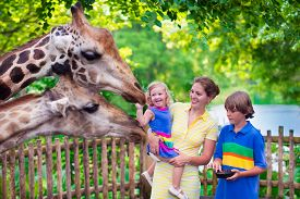 pic of zoo  - Happy family young mother with two children cute laughing toddler girl and a teen age boy feeding giraffe during a trip to a city zoo on a hot summer day - JPG