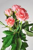 foto of bunch roses  - Bunch of pink roses isolated close up - JPG