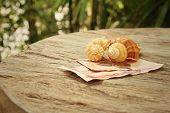 picture of conch  - Conch with money of Thai Bath on background of wooden - JPG