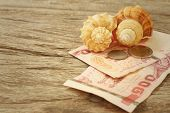 stock photo of conch  - Conch with money of Thai Bath on background of wooden - JPG