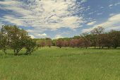 foto of tall grass  - green meadow beside the forest with red trees and tall grass - JPG