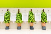 picture of urination  - The modern style decorative restroom interior design with white urinal row and green ornamental plants - JPG