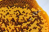 image of beehive  - f beehive for background  Thailand stock photo