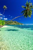 picture of french polynesia  - Public beach on the north side of tropical Moorea island - JPG