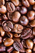 stock photo of coffee coffee plant  - coffee background coffee beans on a table - JPG