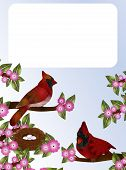 image of cardinals  - Pair of cardinals sitting on pink blossoming tree by their nest - JPG