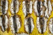 picture of oregano  - uncooked sardines fillet with oregano in olive oil - JPG