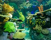 foto of coral reefs  - Coral reefs are underwater structures made from calcium carbonate secreted by corals - JPG