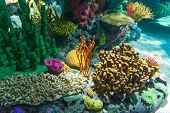 image of coral reefs  - Details of the Coral Reef seen in Ripley - JPG