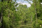 pic of marshes  - a swampy marsh surrounded by trees and plants - JPG