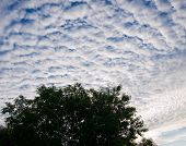 pic of early morning  - Thick cumulus clouds against a blue sky - JPG