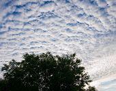 foto of cumulus-clouds  - Thick cumulus clouds against a blue sky - JPG