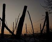abandoned vineyard sunset