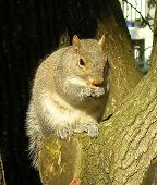A Squirrel Eating An Almond